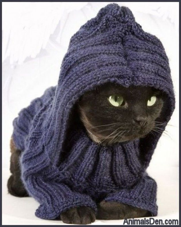 33 best images about Cats and Knitting... don't go ...