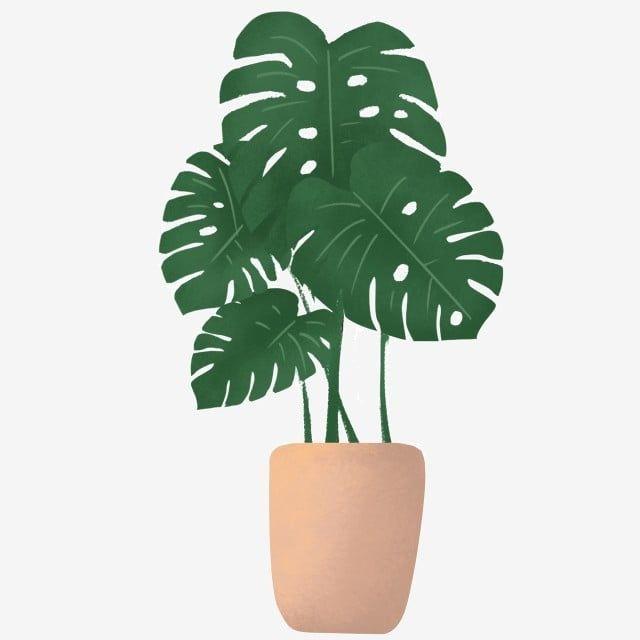 Gambar Hijau Tumbuhan Daun Kartun Hiasan Reka Bentuk Tanaman Png Dan Psd Untuk Muat Turun Percuma Ilustrasi Daun Wallpaper Tanaman Tanaman