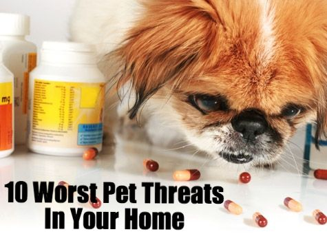 Prevent Pet Poisonings: Eliminate the 10 Biggest Pet Threats in Your Home