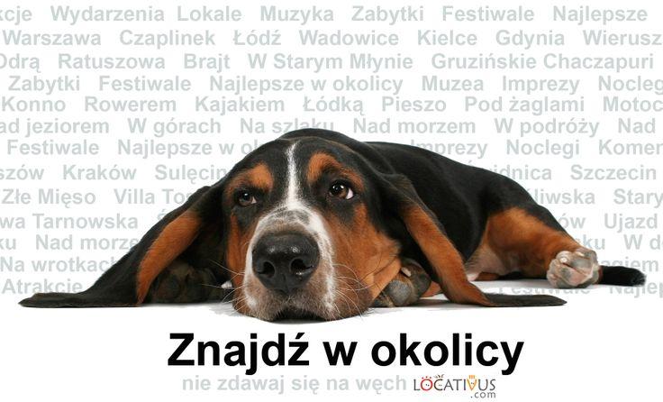 Najnowsze badania Locativus.com wskazują, że: - większość ludzi ma telefony komórkowe - nie wszyscy ludzie mają psa - posiadacze psa nie zawsze mają go przy sobie - większość psów nie ma telefonów