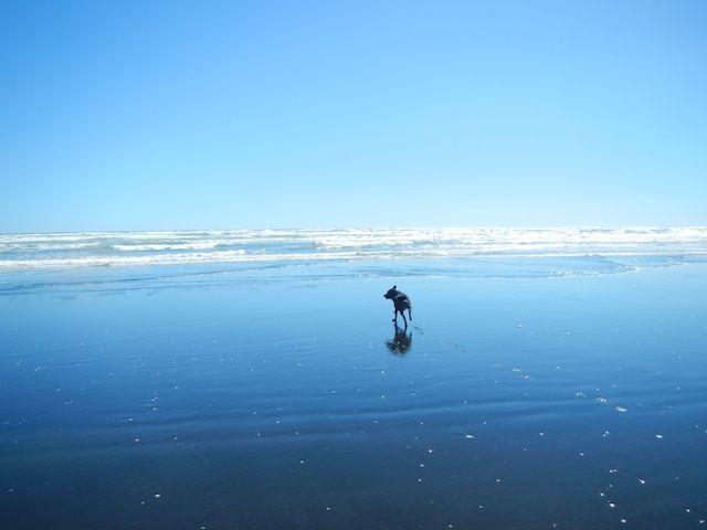 Karioitahi Beach #beach #KarioitahiBeach