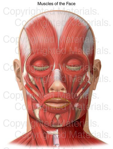 best 20+ muscles of the face ideas on pinterest | 1 min games, Cephalic Vein