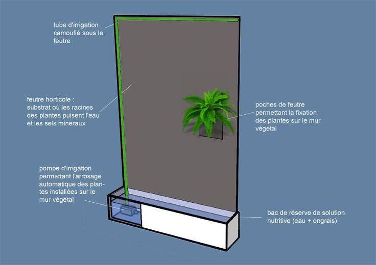 La technique du mur végétal est née dans l'esprit de Patrick Blanc après l'observation (...)de cultivé les plantes selon un principe d'hydroponie verticale.