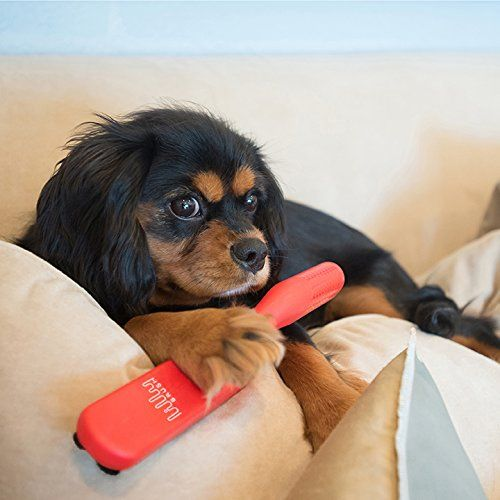 The Shedding Saga Getting Dog Hair Off Furniture Dog