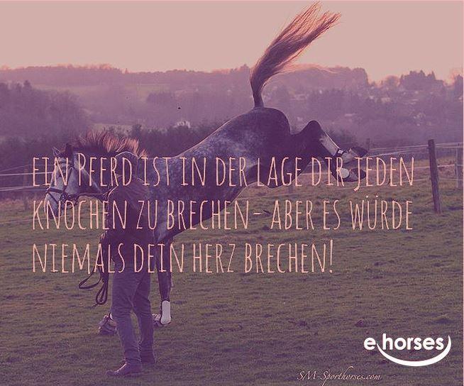 www.ehorses.de  http://blog.ehorses.de/