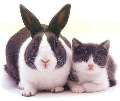 twins bunny and kitten: Rabbit, Twin, Cat, Funny Messages, Funny Pics, Funny Pictures, Bunnies, Kitty, Animal