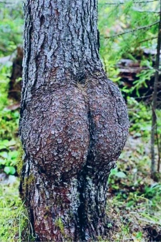 The Butt Tree