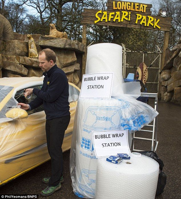 Mock-up: But the safari park in fact has no need of such drastic measures to protect against monkey mayhem