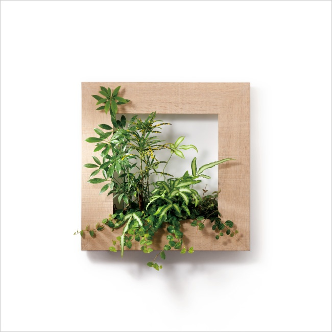 Picture frame for plants