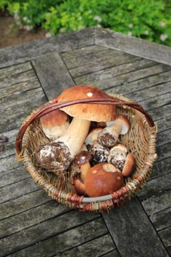"beckoningforest: "" stephenearp: ""A good mornings foraging "" """