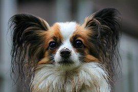 Free photo: Animal, Dog, Alone, One, Brown - Free Image on Pixabay - 1585173