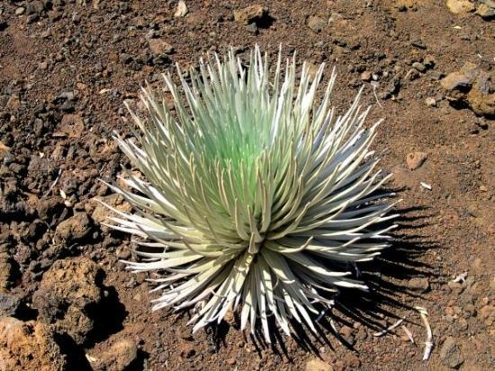 In the crater trail of Haleakala-only found here!
