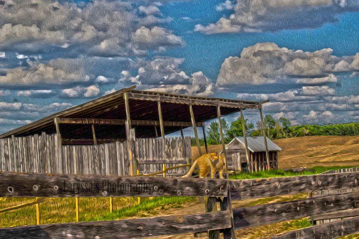 Edmonton, Alberta, Spring Lake, Farm, Parkland County, Cat, Fence, Blue Sky, Oil Painting, Oil Painting Photography, Laryssa's Photography
