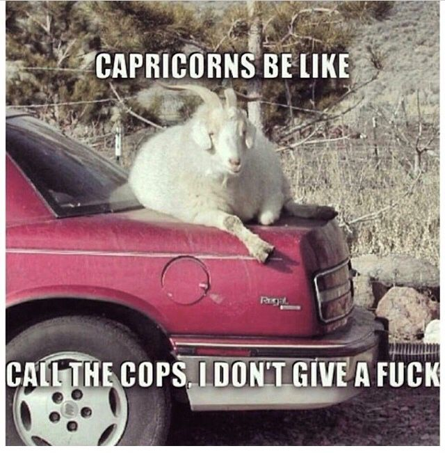 It's because we know the rules inside and out! Just try and mess with a Cappy!