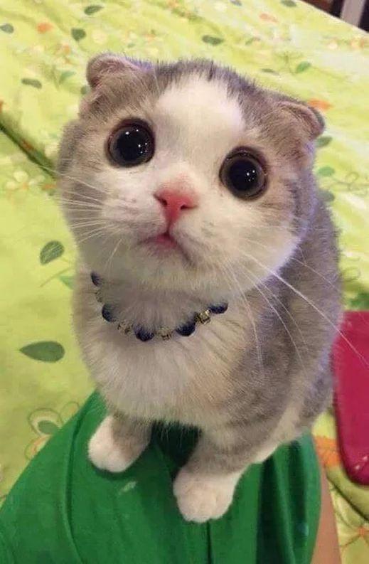 57 besten gatti Bilder auf Pinterest | Kätzchen, Flauschige kätzchen ...