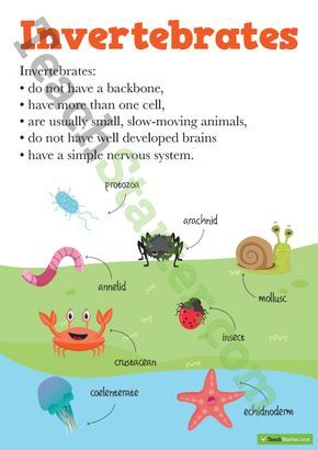 vertebrates and invertebrates posters teaching resource montessori vertebrates. Black Bedroom Furniture Sets. Home Design Ideas