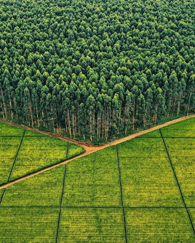 Tea And Eucalyptus : BeAmazed In 2020