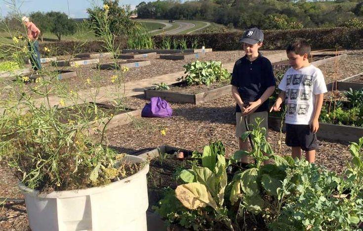 Biological pest controls: Uncle Matt's Organics | Pesticide Action Network