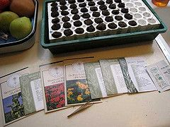 Starting Seeds Indoors: Jump-Start Your Garden Today: Seeds Packets, Seeds Inside, Start Indoor, Plants Indoor, Start Seeds, Seeds Start, Seeds Indoor, Peppers Start, Great Tips