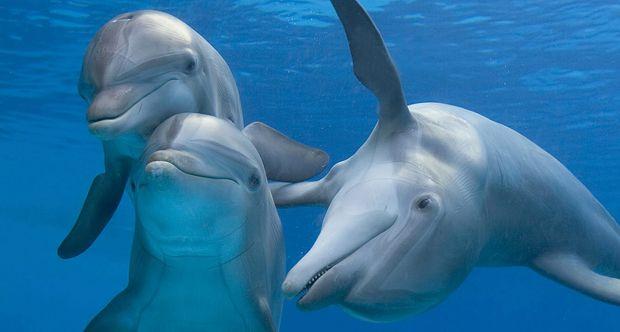 Il nostro cervello si può riparare? La risposta arriva dai delfini
