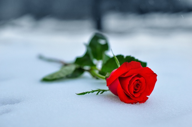 A single red rose is only $3-4 at your local grocery store. Small price for a romantic gesture!