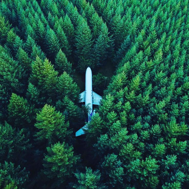 """""""15000 scientists just gave a catastrophic warning about the fate of humanity"""" The Independent. We think it's time to react. Reduce your own footprint eat less meet recycle. So many simple gestures to build our future in better conditions  . . . . . . #humanity #ecology #future #pollution #biosphere #plane #forest #endoftheworld #science #bio #organic #vegetarian #vegan #greenhouse #ecosystem #renewableenergy #natural #misery #humanmisery"""