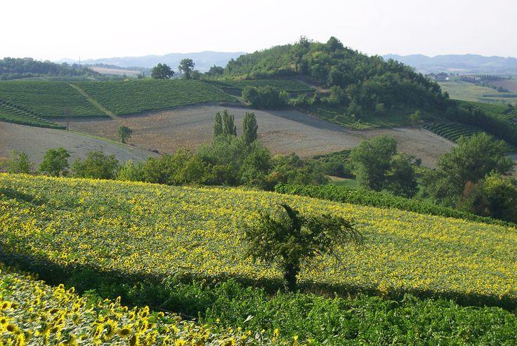 Regione Piemonte, Monferrato, Sala Monf.to (AL) Italy
