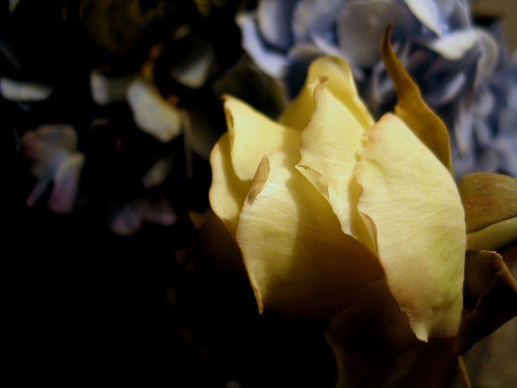 cold porcelain roses
