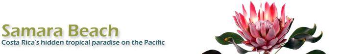 Search Results - Samara, Costa Rica, Samara Beach, Playa Samara, Carrillo, Carrillo Beach, Playa Carrillo, Beach Hotels, Tourist Info, Map, Help, Advice, Reservations