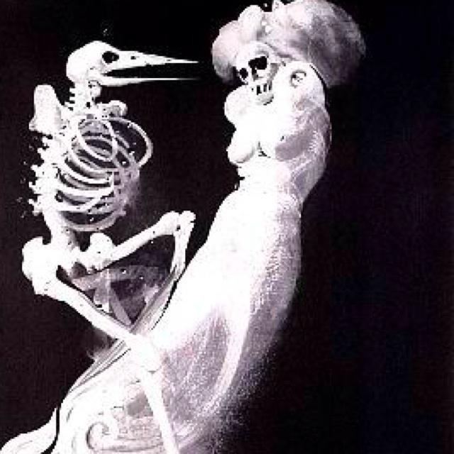 Exoskelatal