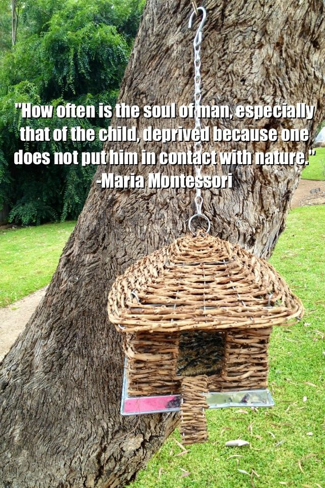 Nature and learning quote