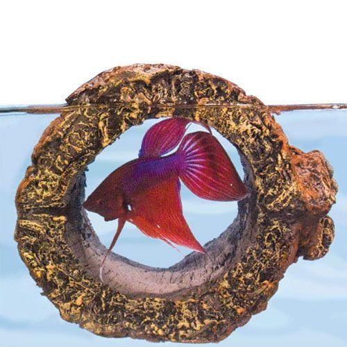 26 best betta bling images on pinterest for Betta fish floating