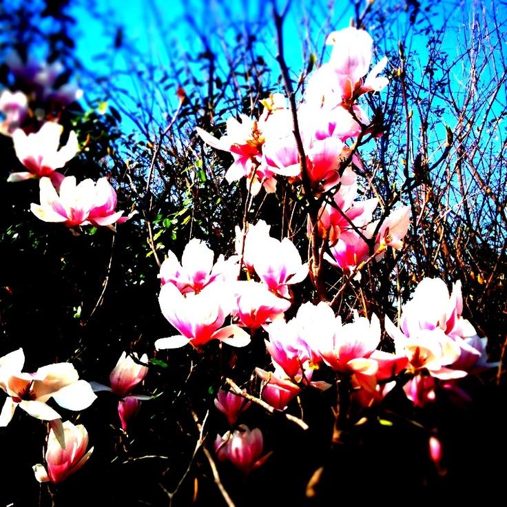 Primavera II