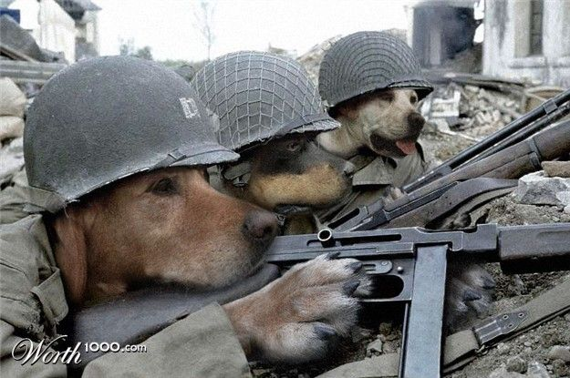 Let us remember all the military dogs who provide protection and emotional support to all our service men and women.
