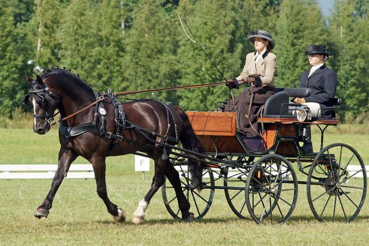 Horse and cart! Driving is so much fun and is a cool skill for a horse to have. #stylemyride