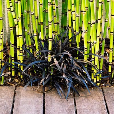 The 25 best Black bamboo plant ideas on Pinterest Bamboo garden