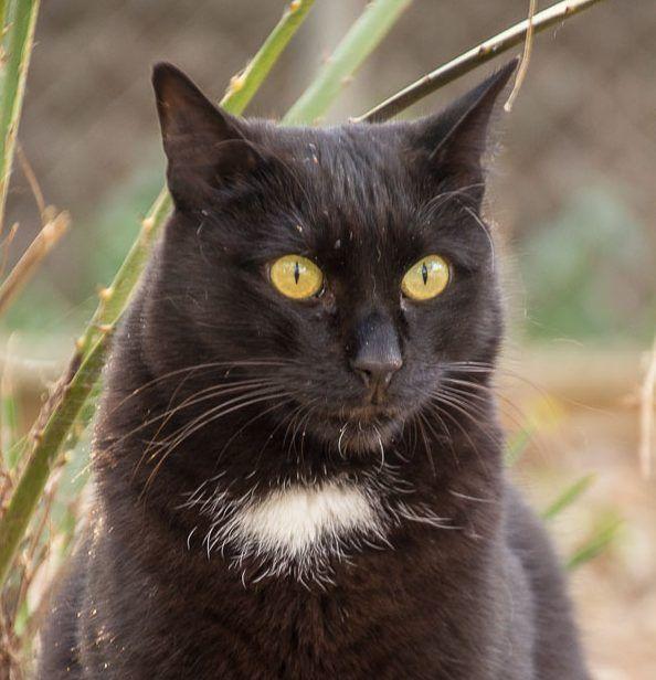 00678-27122015-trifolium gatos morgan