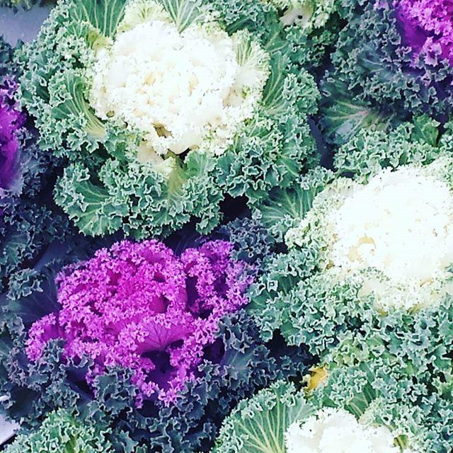 Kwiaty Czy Nie Kwiaty Dianapozytywnie Vegetables Cabbage