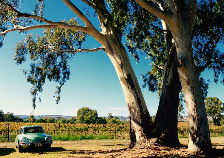 A personal favorite from my Etsy shop https://www.etsy.com/au/listing/291544847/a-drive-in-the-country-car-photography