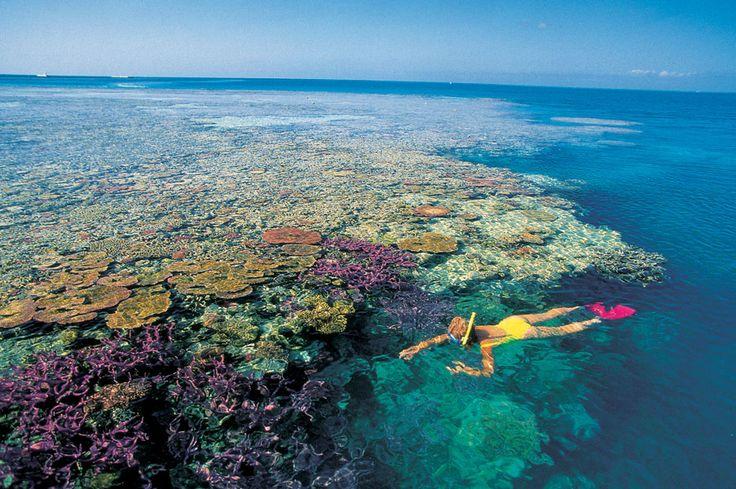 Great Barrier Reef Corals in Australia