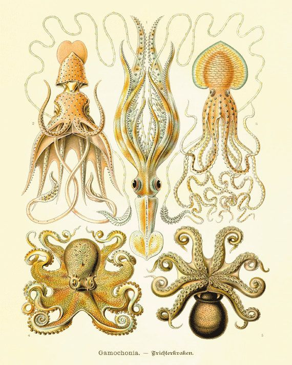 Octopus vintage art nautical art ocean art sea beach art for Vintage ocean decor