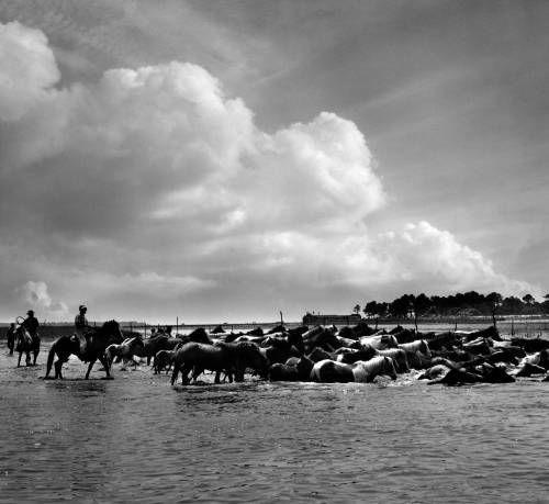 Chincoteague cowboy essay island photographic saltwater