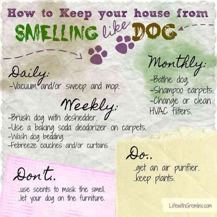 Stinky Dog? How to Get Dog Smell Out of the House Dog