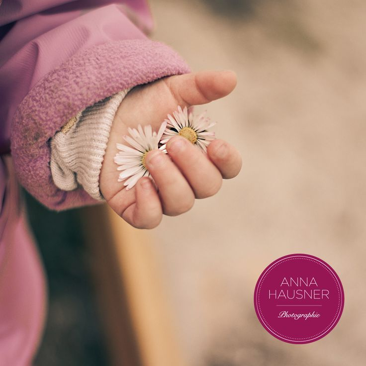 Kinderhand, Gänseblümchen, Frühlingsanfang
