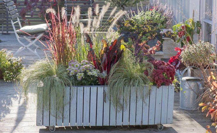 Sichtschutz mit Pflanzen Die Möglichkeiten im Überblick