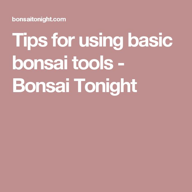 Tips for using basic bonsai tools - Bonsai Tonight