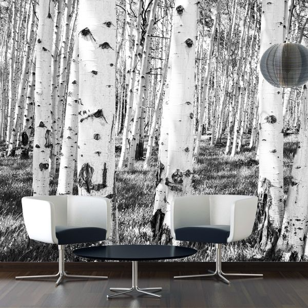fototapete birken grey foto tapete baum vlies vliestapete natur wald pflanze - Fototapete Grau Wei