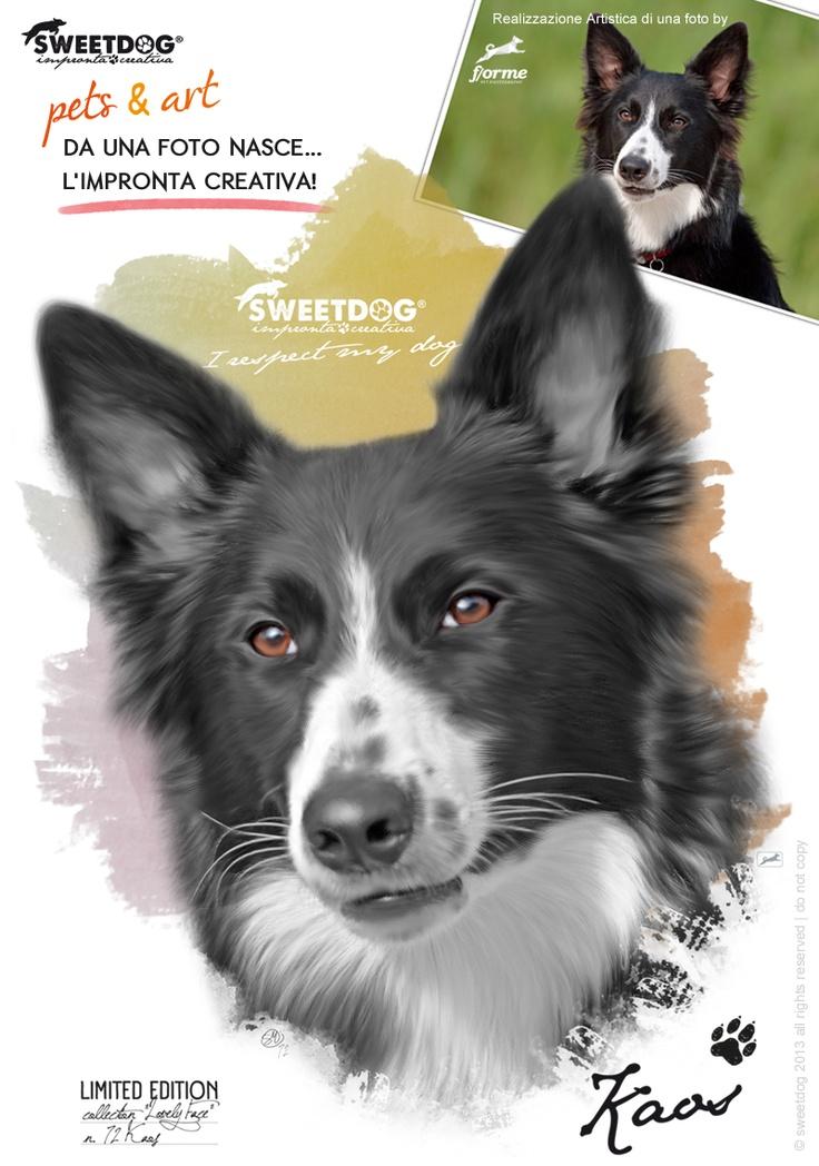 DOG: KAOS (Border Collie) - Personalized dog T-Shirt