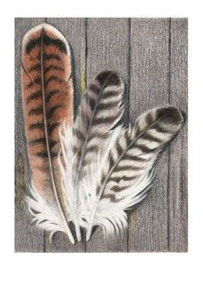 Red Tail Hawk Feather Greeting Card