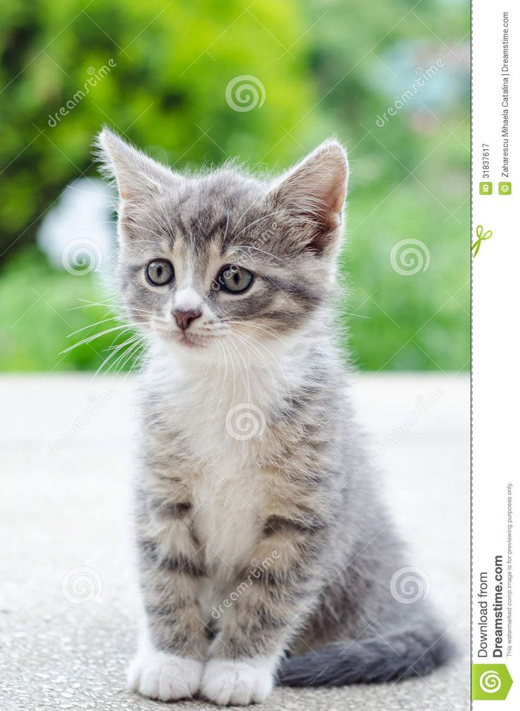 Cute Tabby Kitten Royalty Free Stock Photography - Image: 31837617